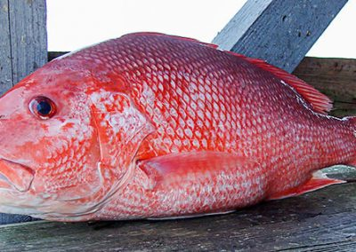 red-snapper-mobile-bay-adventures-charters
