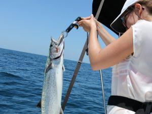 mackerel-mobile-bay-adventures-charters